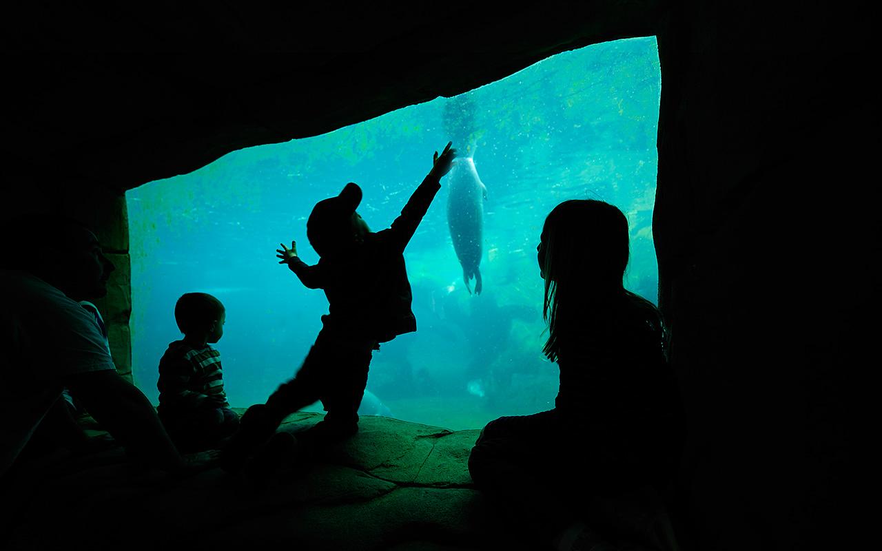 Underwater_1280x800