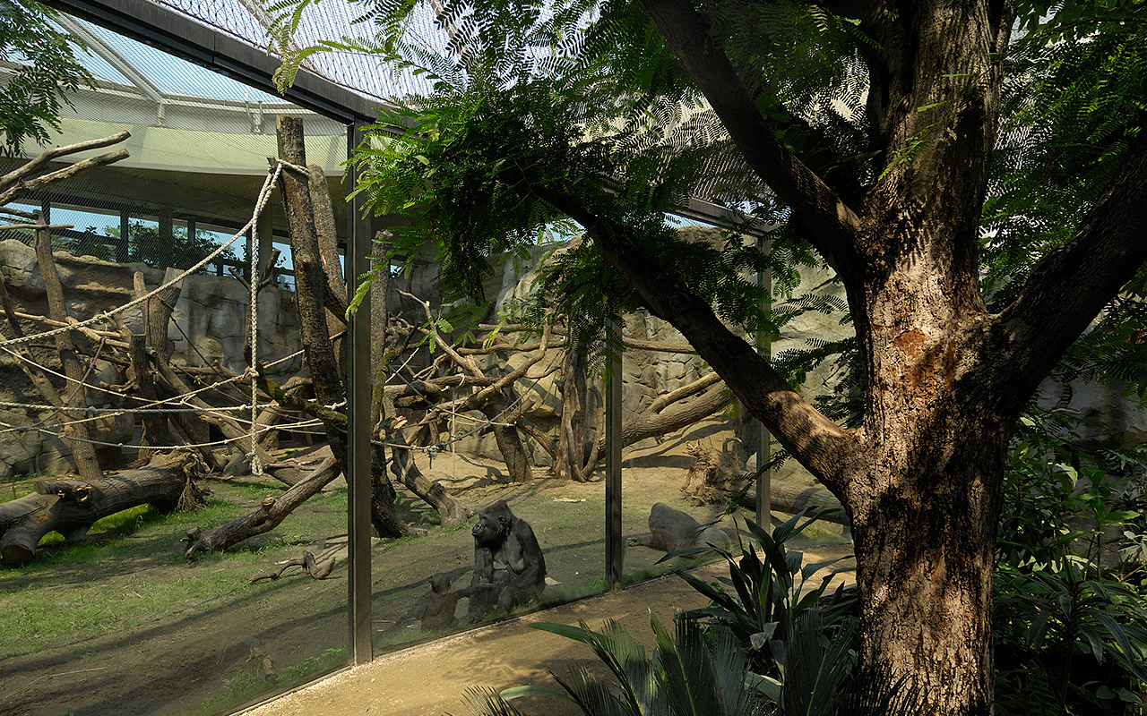 Zoo Frankfurt - Borgoriwald