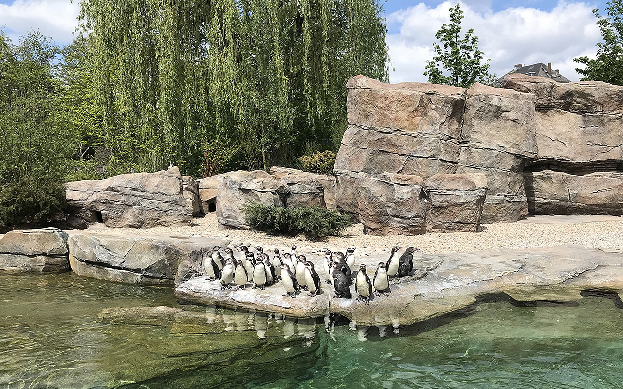 pinguin_03_1280x800